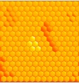 Honey Cells vector image