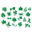 Green leaves and plants set vector image