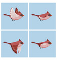 flying cardinal bird fem animation sprite sheet vector image vector image