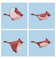 flying cardinal bird fem animation sprite sheet vector image vector image