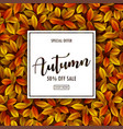 autumn sale background with autumn leaves vector image