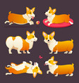set cute dogs breed welsh corgi pembroke on vector image