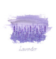 lavender field pattern on purple stain isolated on vector image vector image