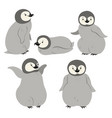 set of penguins isolated on a white background vector image