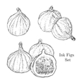 Ink figs sketches set vector image vector image