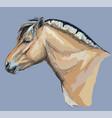 norwegian fjord pony vector image vector image