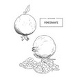 pomegranate engraving sketch etch vector image vector image