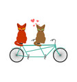 cat lovers on tandem lover of cycling joint walk vector image vector image
