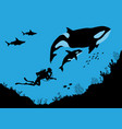 underwater wildlife killer whales and divers vector image