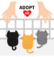 adopt me three kittens looking up to human hand vector image