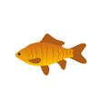 red zebra fish icon closeup vector image vector image