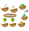 description of planting steps vector image vector image