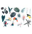 exotic floral elements vector image vector image