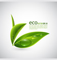 realistic eco leaves vector image vector image