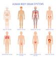 cartoon human body organs systems anatomical vector image vector image