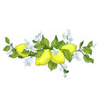 lemon tree in tattoo style image light little vector image
