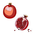 pomegranate cut garnet half vector image