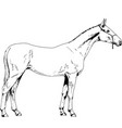 race horse without a harness drawn in ink hand vector image vector image
