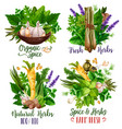 spices and herbs food condiments and seasonings vector image vector image
