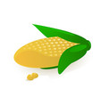 sweet corn vector image