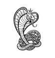 viper snake cobra in crown tattoo art design vector image