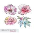 watercolor flower vector image