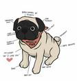 anatomy pug dog chart cartoon vector image vector image