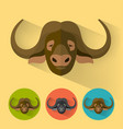 buffalo portrait with flat design vector image vector image