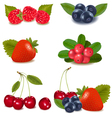 Collection with berries and cherries vector | Price: 3 Credits (USD $3)