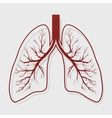 Human Lung anatomy vector image vector image