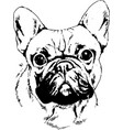 pedigree dog drawn in ink hand vector image vector image