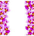 purple vanda miss joaquim orchid border vector image