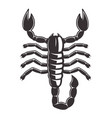 scorpion tattoo style black vector image vector image