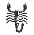 scorpion tattoo style black vector image