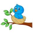 Blue bird cartoon in the nest vector image vector image