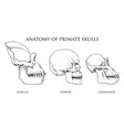 human and chimpanzee gorilla biology and anatomy vector image vector image