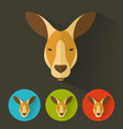 kangaroo portrait with flat design vector image vector image