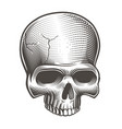 part skull vector image vector image