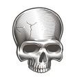 part skull vector image vector image