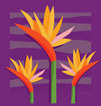 birds of paradise pattern vector image vector image