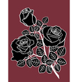 Black and white roses on the dark vector image vector image