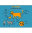 Cat ordinary home Infographics vector image