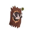 cute raccoon sitting in hollow of tree hollowed vector image vector image