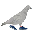 Going gray pigeon vector image vector image