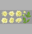 flowers yellow dahlia with buds and leaves vector image