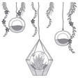 mini garden in crystal glass vector image vector image