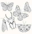 moths butterflies and beetles set of vector image vector image