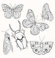 moths butterflies and beetles set vector image