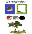 a cute hedgehog pack vector image vector image