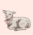 hand drawn lamb vector image